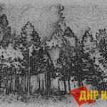 Надо срочно менять Лесное законодательство, пока не сгорел весь российский лес! А точнее - менять политическую систему